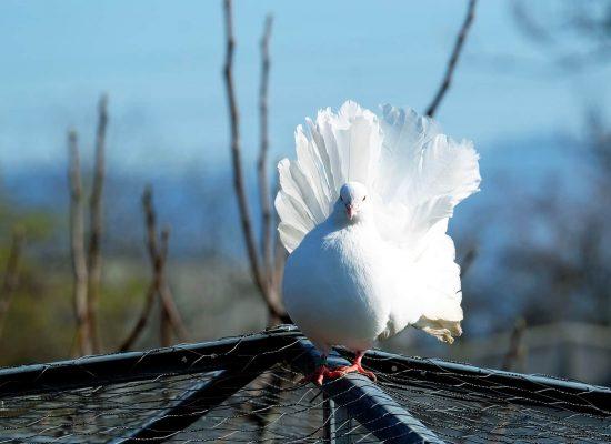 dove-1238214